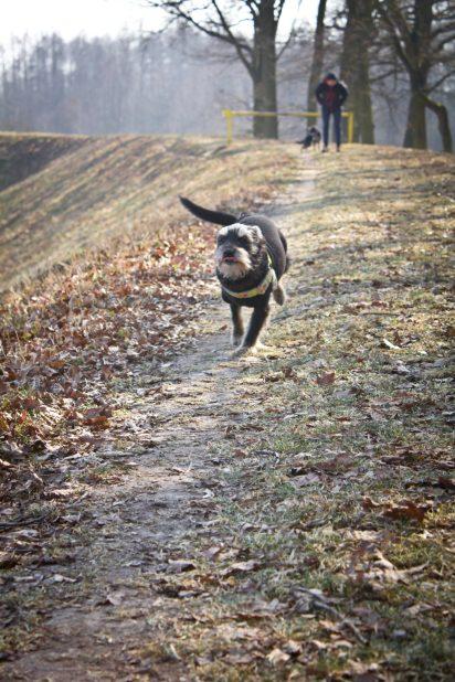bieganie wchodzi mocno . wszystkim pieskom :)