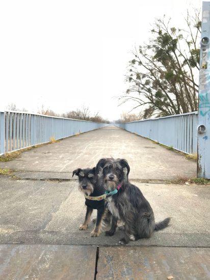 suczydła i początek Mostu Kilometrowego