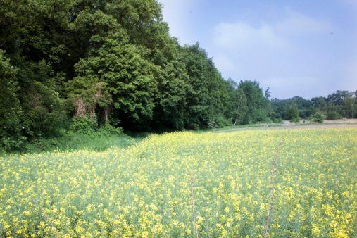 W tym miejscu zaczął się nasz pierwszy spacer po Rędzińskim.