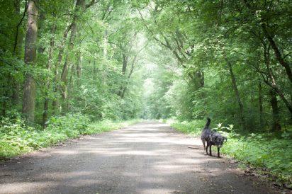 Dobrze utrzymane leśne dukty i to pokaźnej szerokości.