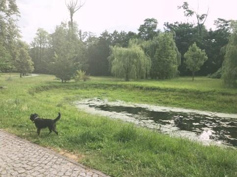 W parku są punkty z wodą, jednak pomijając roślinne żyjątka powierzchniowe trzeba pamiętać o kaczkach, dla których jest to dom.