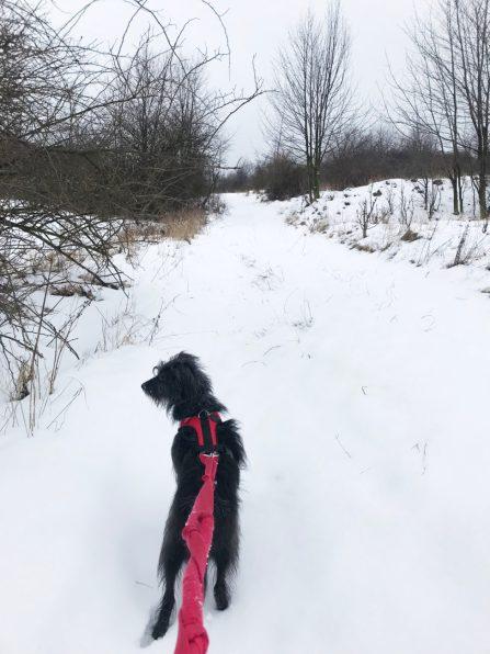 na przód, przez śniegi!
