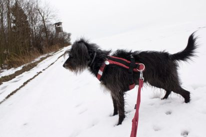 nie myślcie że w Górach Kaczawskich nie ma już śniegu :)