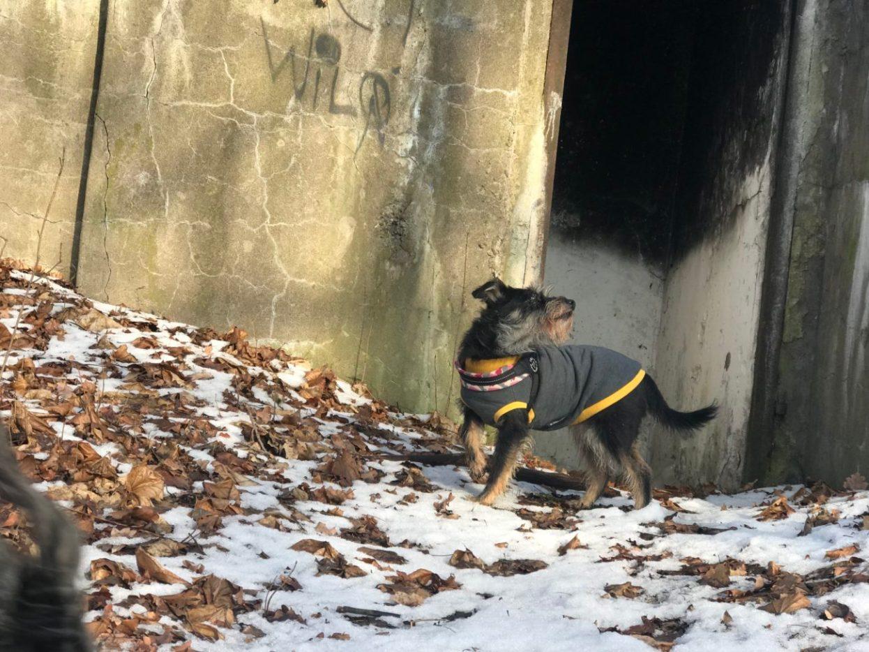 Pufa, zaprawiona w zwiedzaniu ze mną ruin przeróżnych czuje sie bardzo dobrze nawet w takiej scenerii :)