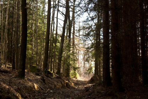 po odbiciu ze ścieżki przy Bobrze zaczyna sie las