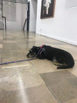 a jakby kto pytał jak Pufinka odnalazła się w muzeum