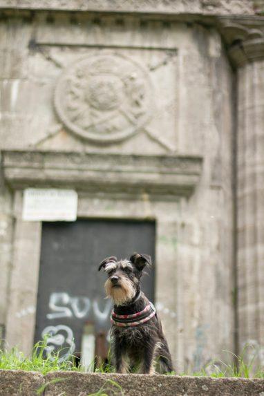 epicki pies i epicka wieża :)