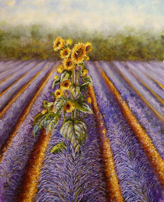 picture of phased sunflowers in lavender