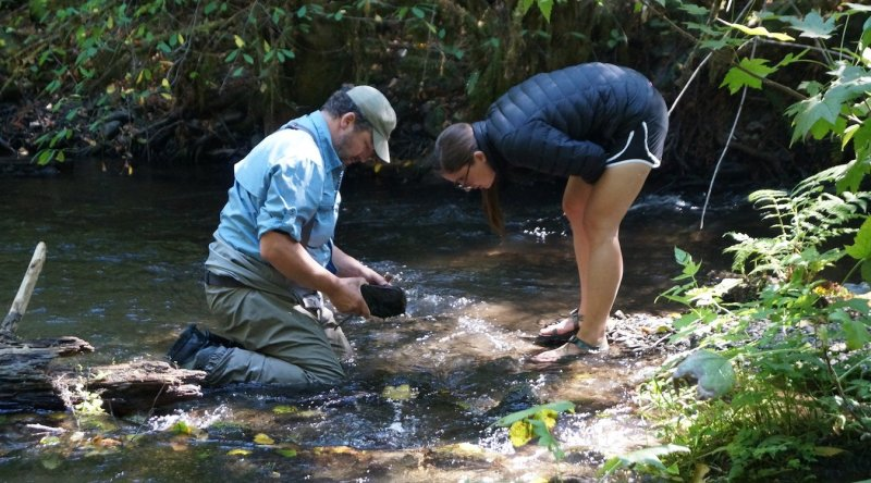 Checking stream health by monitoring for insects in the stream.