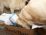 barkbox - 7