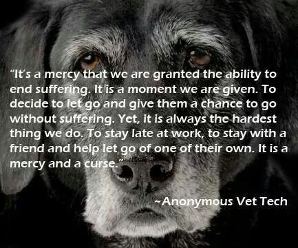 Dealing With Euthanasia A Vet Tech Perspective