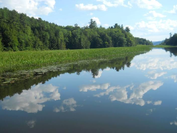 Paisaje de un río tranquilo junto a un frondoso bosque en un día algo nublado