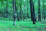 Frondoso y verde bosque con mucha vegetación en USA