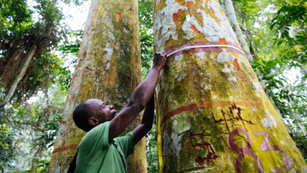Supertrees: Meet Congo s Caretaker of the Forest Pulitzer Center
