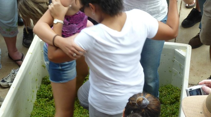 Sonoita Vineyards celebrates the harvest with Harvestfest