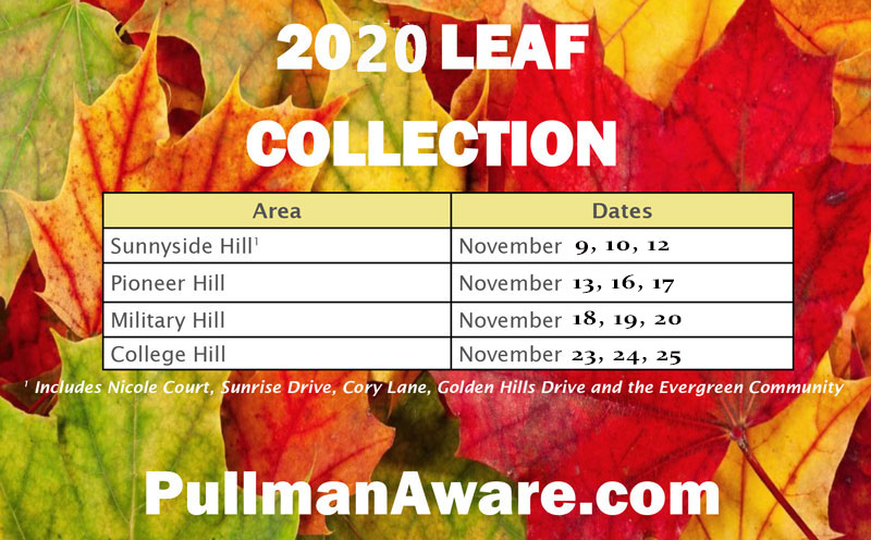 leaf-collection-2020