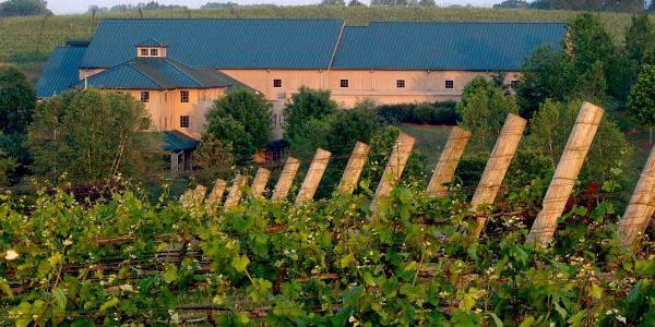 shelton-vineyards