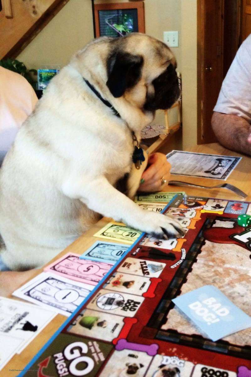 Dog-plays-games
