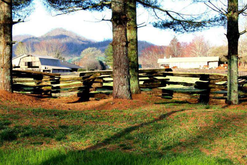 horses-at-Dillard