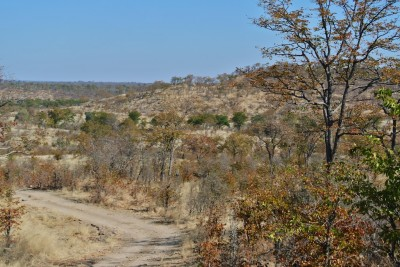 Dirt track through Hwange National Park, Zimbabwe