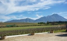 Rijk's vineyards
