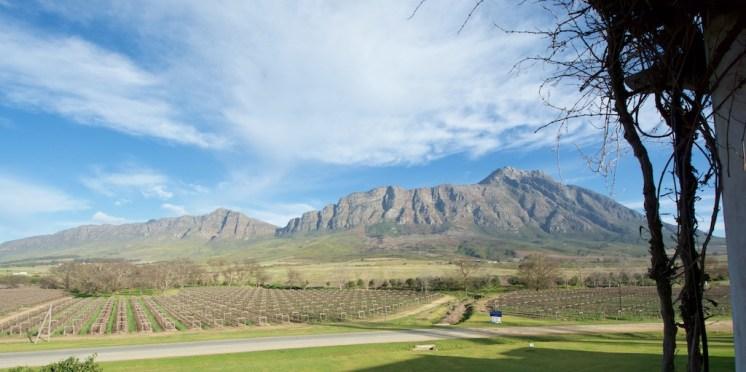 View of Saronsberg mtn from Twee Jonge Gezellen