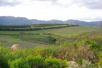 Waterkloof vineyard view