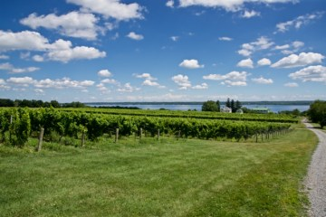 Vineyards and Seneca Lake