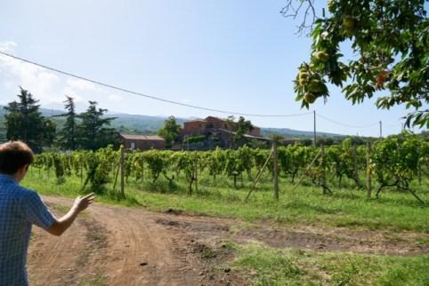 Scilio-vineyards