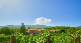 Terrazze-dellEtna-vineyards