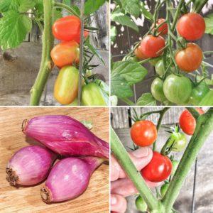 TomatoesAndOnions