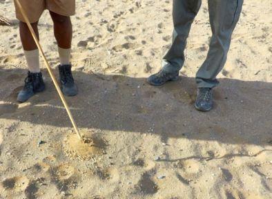 A tiny termite mound