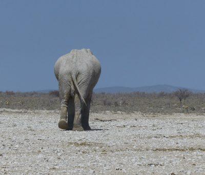 Bye from elephant