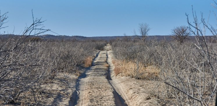Namibian bush