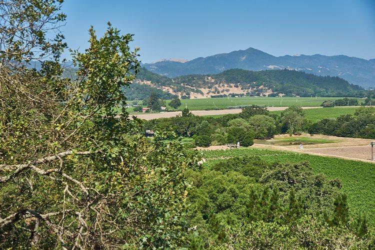 Silverado Vineyards View