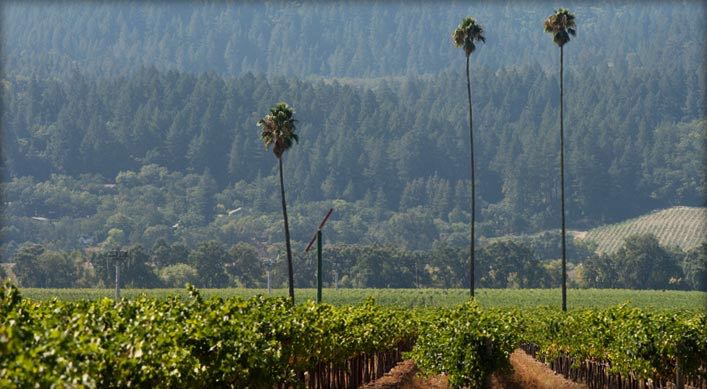 Three Palms Merlot Vineyard