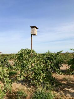 Owl box in Marians Vineyard