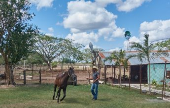 Cowboy on the farm
