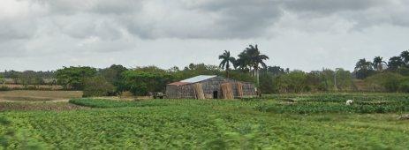 Tobacco farm and barn 1