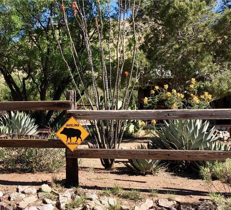 Return To Willcox, Arizona