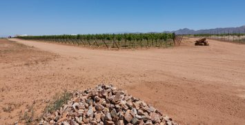 A vineyard in Willcox