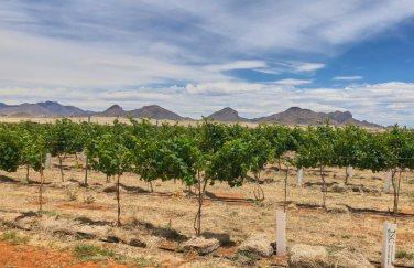 Sonoita Elgin area vineyard