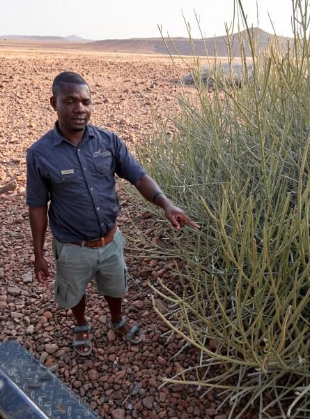 Johannes with euphorbia bush