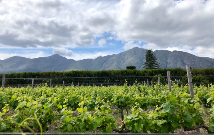 Vineyard and mountain views at Colmant Cap Classique & Champagne photo