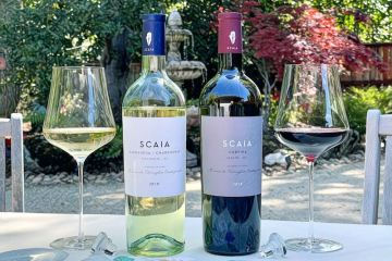 SCAIA wines featured photo