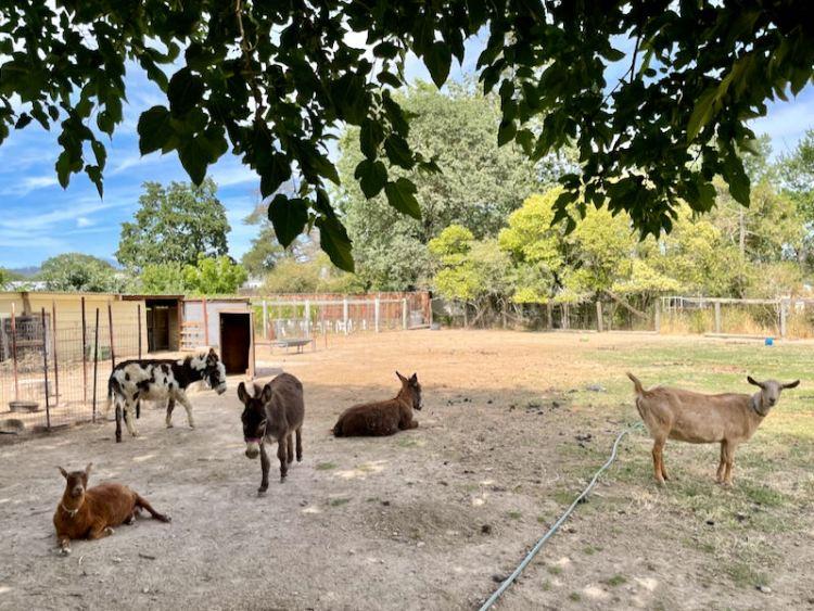 The adorable farm animals photo