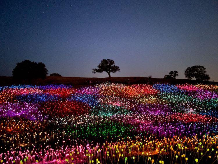 Field of Lights photo