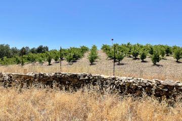 Tablas Creek Vineyards photo