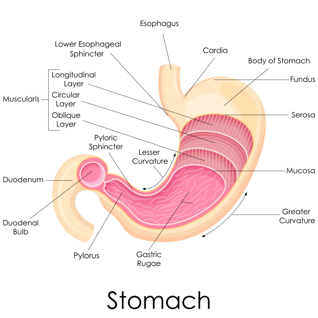 swallowing food diagram on off toggle switch wiring gastro esophageal reflux ger and idiopathic pulmonary