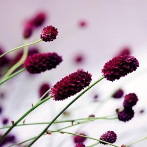 Purple buds on flowers